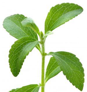 Närbild på växten stevia
