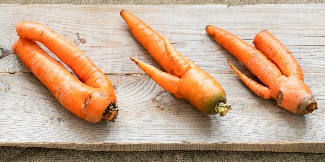 three-ugly-carrots-are-lying-on-grey-wooden-planks-on-burlap